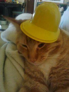 Dozer in a hat!