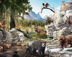 """Check out new work on my @Behance portfolio: """"Forest animals photo collage for client"""" http://be.net/gallery/60919295/Forest-animals-photo-collage-for-client"""