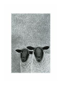 Ink art print Animal print Black & white art A4 Sheep by caitlihne