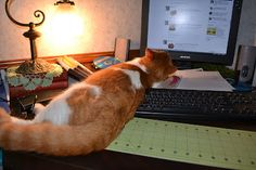 Sepia Puppy: Lackadaisicats -- Your Keyboard Cats