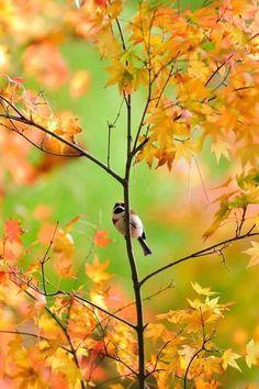 Thanks for visiting Beautiful Mother Nature. Autumn Scenery, Autumn Trees, Autumn Leaves, Autumn Harvest, Gray Garden, Especie Animal, Autumn Day, Autumn House, Happy Autumn