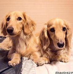 ❤ twins