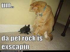 Silly cat, that's a turtle!