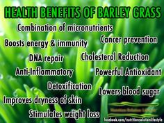 HEALTH BENEFITS OF BARLEY GRASS    Barley grass is the leaves of the barley plant, rather than the grain itself. Though the grain has been shown to be a fibrous, nutritious food, barley grass also provides numerous health benefits. Barley grass is usually consumed as an extract.    - MULTI-VITAMIN & COMBINATION OF MICRONUTRIENTS