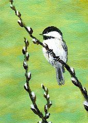 Pussy Willow Paintings - Chickadee On Pussy Willow - Bird 2 by Kathleen McDermott