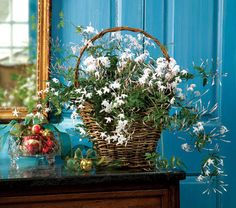 Jasmine, Jasmine Flowers, Indoor Jasmine Plants, Flowering Indoor Jasmine Plants, Jasmine Vines.