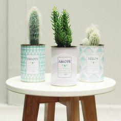 pot fleurs plantes cactus tropiques tropical décoration loft appartement scandinave pastels diy
