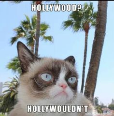 Grumpy Cat in Hollywood