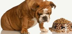 Abady Frozen Dog Food Recalled Over Salmonella Fears   Dogster