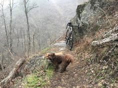 """Me and my puppies went down some single trails in the wet and cold, regardless of the weather find your adventure."""