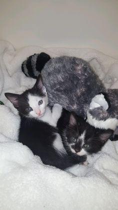 Meet Kipple and Odradek two kittens found in a water heater closet.
