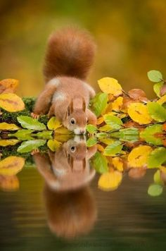 Thirsty Little Fluffy Tail....Double the pleasure, double the fun.  The magic of reflection!