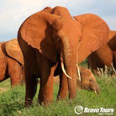 Safari ved Kenya-kysten. Se mere på www.bravotours.dk @Bravo Tours #BravoTours #Travel