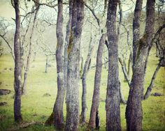 Woodland photograph  nature photograph woods by LupenGrainne, $30.00