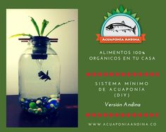 Mason Jar Aquaponics DIY (Versión Andina) by www.acuaponiaandina.co
