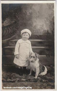 Wire Fox Terrier, c.1910 @KaufmannsPuppy