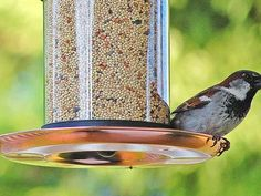 How To Get Birds To Use A New Bird Feeder The Spruce - As Any Backyard Birder Knows A Single Bird Feeder Is Rarely Adequate Once You Get Hooked On Feeding The Birds Whether You Are Choosing A Larger Feeder To Accommodate More Birds Getting Different Ty Wild Bird Food, Wild Birds, Finch Feeders, Bird Feeder, Feeding Birds In Winter, Hummingbird Nectar, Bird Feeding Station, Bird House Kits, Bird Aviary