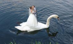Всё самое интересное в интернете! - Как не надо снимать свадьбу