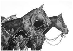 Karmel Timmons: Equestrian Art In Pencil: Portfolio