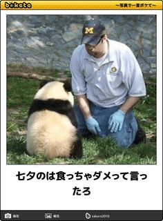 breeder and play with pandas Animals And Pets, Baby Animals, Funny Images, Funny Pictures, Japanese Funny, Panda Love, Panda Panda, Panda Bears, Cute Funny Animals