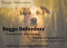 Can Dogs Eat Bananas ? Yes dogs can eat bananas, bananas are a healthy snack for humans, so it's no surprise if you're eating one in the morning and think to yourself. For more information about dogs go to - doggodefenders.com Can Dogs Eat Bananas, Kong Treats, Banana Treats, Dog Eating, Healthy Treats, Small Dogs, Canning, Little Dogs, Home Canning