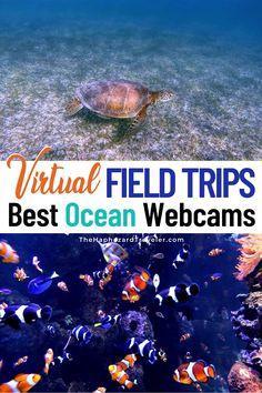 Ocean Lesson Plans, Preschool Lesson Plans, Preschool Ocean Activities, Kindergarten Science, Elementary Science, Ocean Video, Fauna Marina, Stage, Ocean Unit