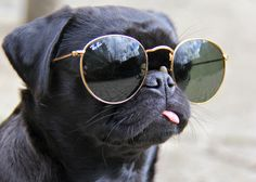 Happy National Sunglasses Day!
