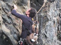 www.boulderingonline.pl Rock climbing and bouldering pictures and news climbing cat