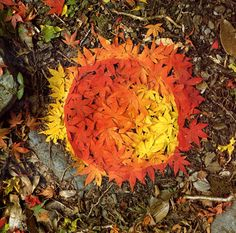 andy goldsworthy. land art, autumn, red yellow leaves, circle, spiral