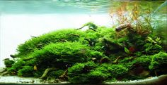 Aquascaping | ... Scapers Europe - International Aquascaping Contest 2010 Results