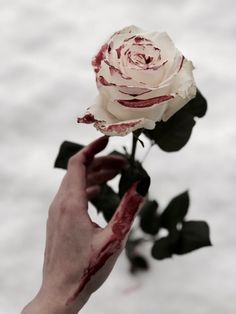 Bloody Rose by Cambion Art Whats Wallpaper, Blood Art, Photo Deco, Some Beautiful Pictures, Foto Art, Dark Photography, Character Aesthetic, Dark Fantasy, Dark Art