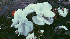 Beyaz beyaz