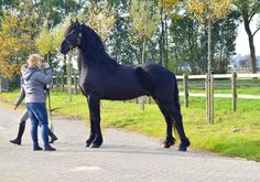 Olbert is sold to Miss. Cindy and Jeannie in The USA - Congratulations with this Black Beauty!!