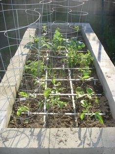 Cinder block raised garden bed. Also, see http://bit.ly/ih2w5O