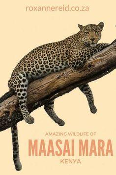 The amazing wildlife of Kenya's Maasai Mara reserve #safari #travel #africa #Kenya