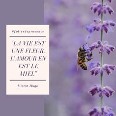 Valensole, Movie Posters, Honey, Lavender, Quotes, Flowers, Film Poster, Billboard, Film Posters