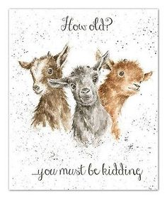 Wrendale Designs Country Set Greeting Card How old must be kidding baby goat