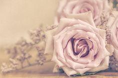 https://flic.kr/p/Jxk9mp | Bouquet of roses - RoCafe