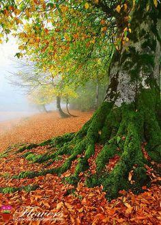 Amazing tree! Where the fairies?
