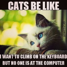 "@lolcatspicz's photo: ""Oh cats. #lol #cats #lolcats"""