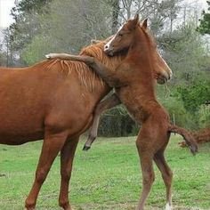 Beautiful colorful pictures and Gifs: Beautiful Animales pictures Cute Horses, Pretty Horses, Horse Love, Beautiful Horses, Animals Beautiful, Horses And Dogs, Simply Beautiful, Beautiful Images, Cute Baby Animals