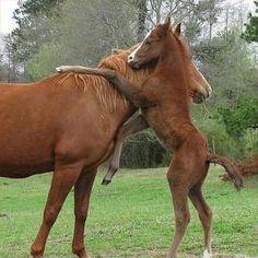 Hug for mom