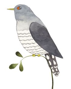 Great Lizard Cuckoo Bird Coloring Pages Coloring Sky