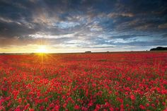 (Antony Spencer- Winner of the Landscape Photographer of the Year Award)    Wiltshire, here we come/Poppies for Ba