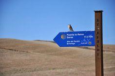 Bird   Camino de Santiago