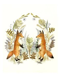 Foxes & ferns