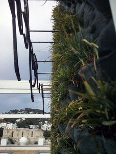 Green Wall in Capri.. #Capri #studioverdepescara #muroverde