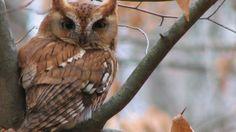 Head-Turning Owls (PHOTOS) - weather.com