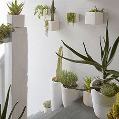 Planters on stairs and along the wall make an inviting place to sit with a cup of tea.