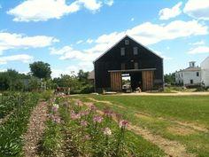 Broadturn Farm. Strawberry pickin June. Scarborough